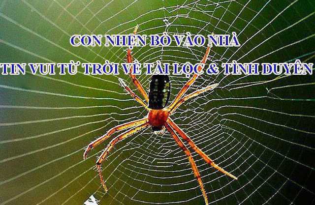 Con nhện bò vào nhà: tin vui từ trời về tài lộc và tình duyên