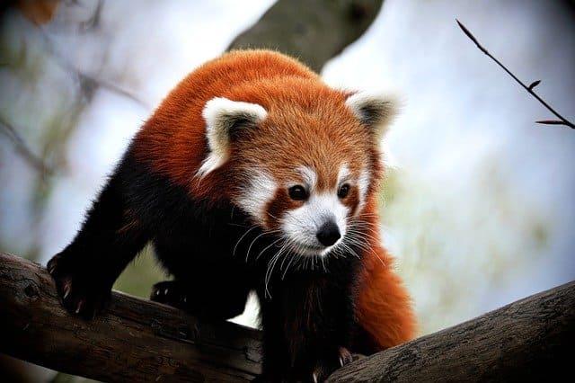 especies en peligro de extincion