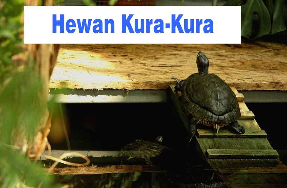 Hewan Kura-Kura, Deskripsi, Ciri, Jenis, Manfaat dan ...