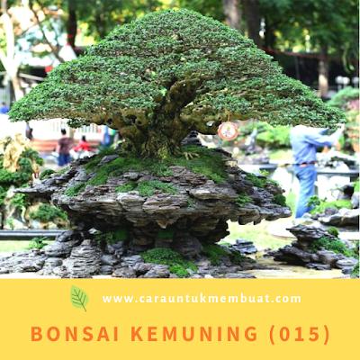 Bonsai Kemuning (015)
