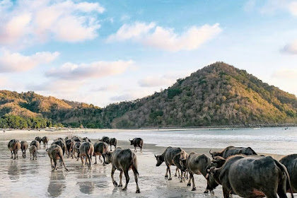 Harga Tiket Masuk Pantai Selong Belanak - Destinasi Wisata Hits di Lombok