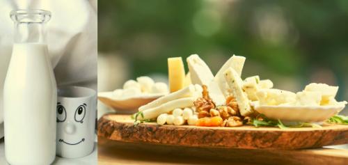 dairy cheese