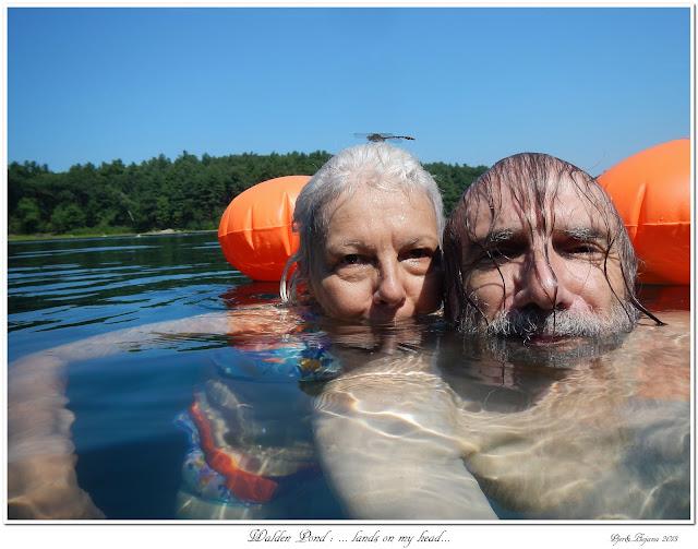 Walden Pond: ... lands on my head...