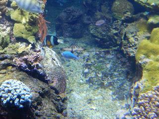 ジェノヴァ水族館の魚