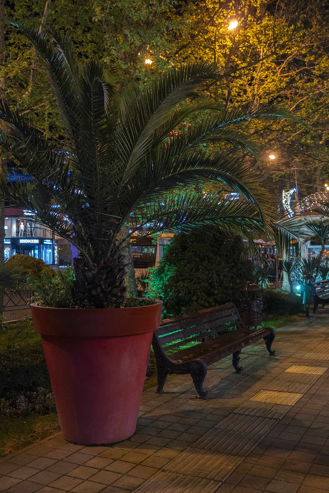 photo Igor Novik potted palm potted plant cute Sochi evening night city park benches