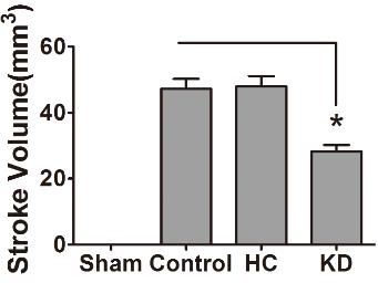 図:ケトン食と脳梗塞体積