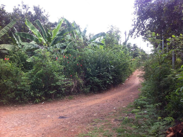 Bán đất vườn cây ăn trái chợ Phú Bình, Long Khánh 01