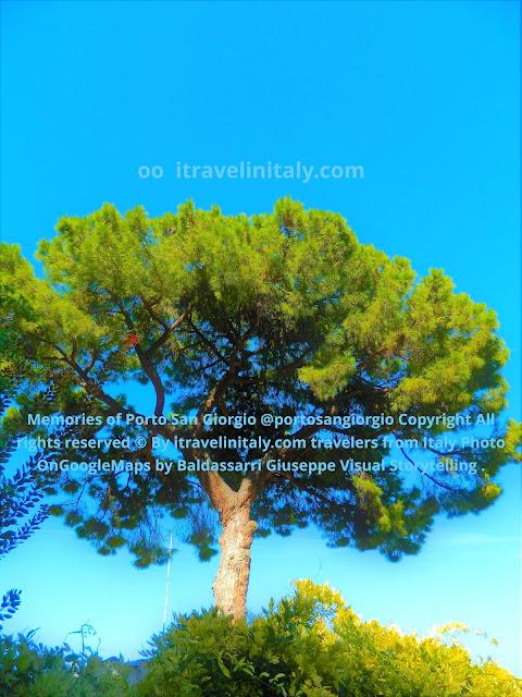 The stone pine memories of Porto San Giorgio @portosangiorgio Copyright All rights reserved © By itravelinitaly.com travelers from Italy Photo OnGoogleMaps by Baldassarri Giuseppe Visual Storytelling