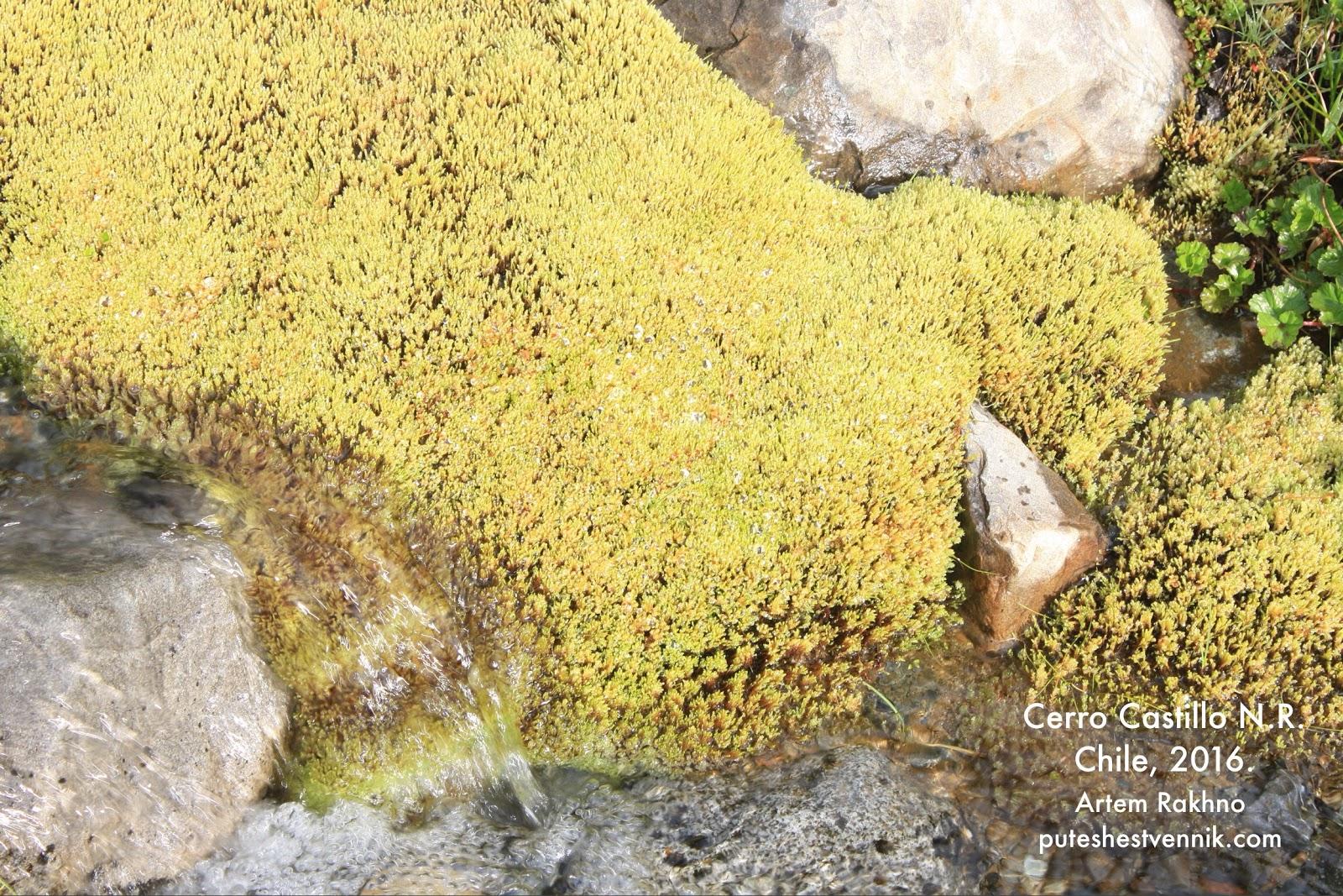 Камни и мох