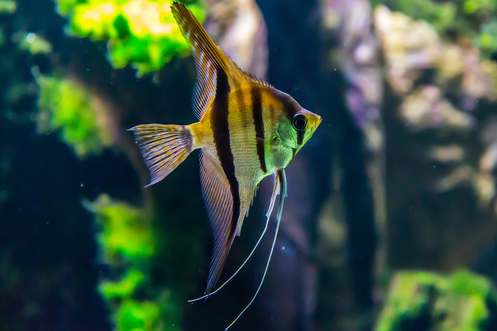 Incredible Fish images HD Wallpaper Download Free