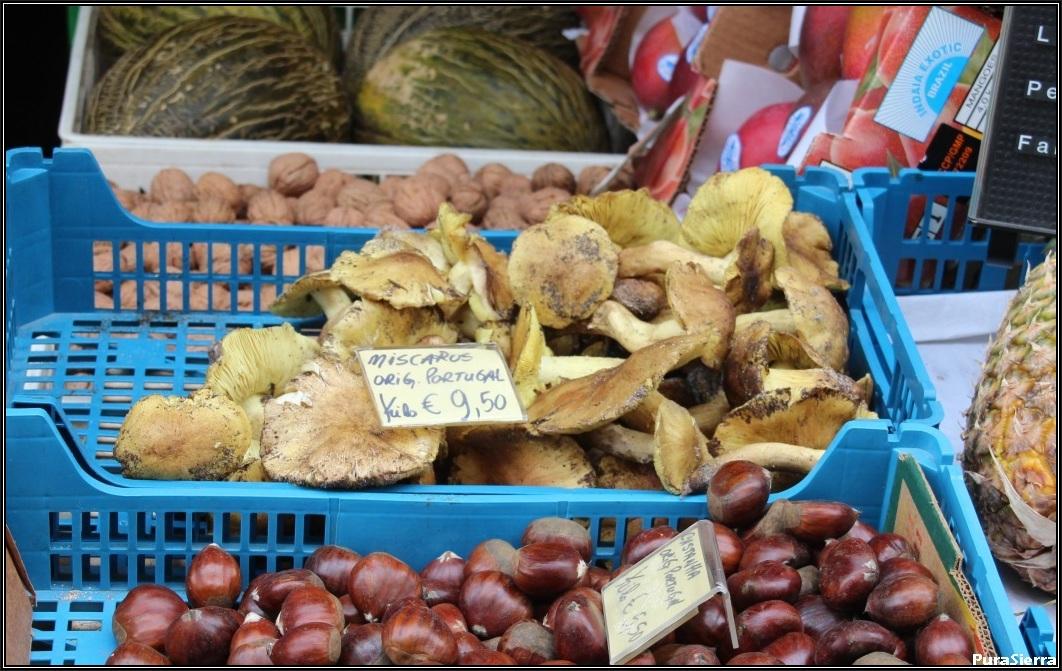 Setas de los caballeros a la venta en una frutería de Lisboa