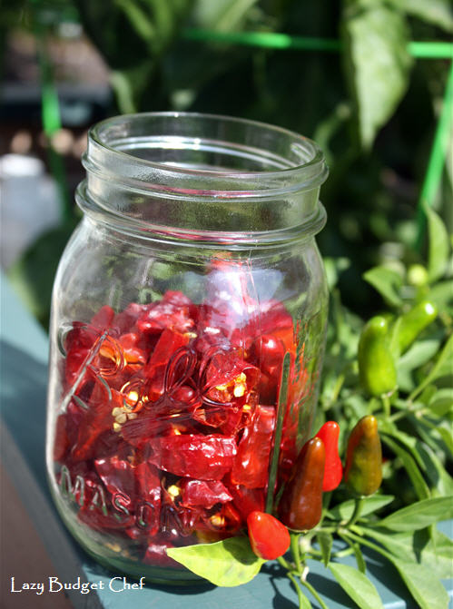 how to store dehydrated hot chili jalapeno, Apache, Habenero peppers