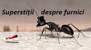 Superstiții furnici