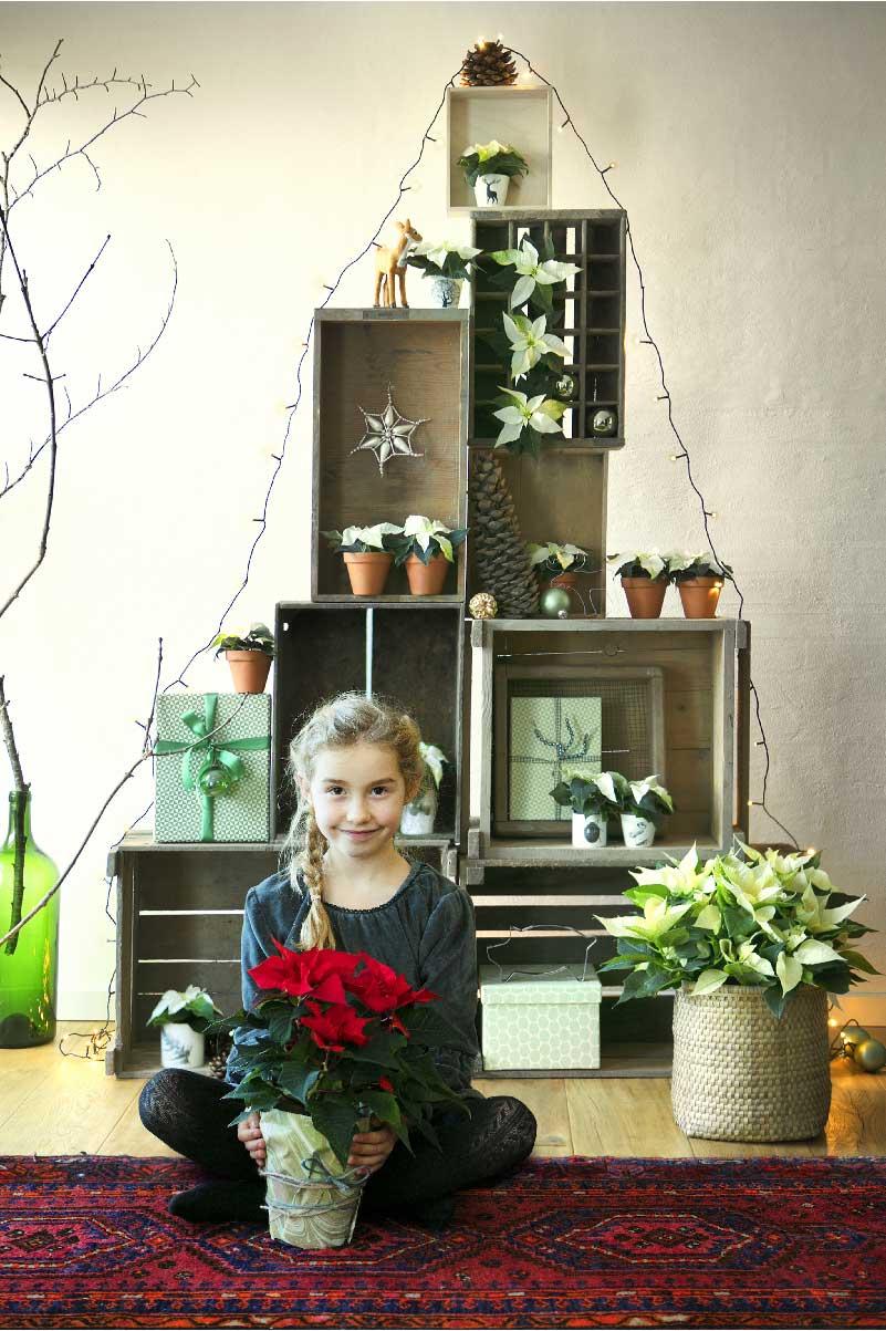 mini guida per comprare la perfetta Stella di Natale
