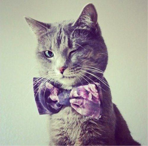 Photo de chat chat chacr ment rigolo qui nous fait un - Photo de chaton rigolo ...