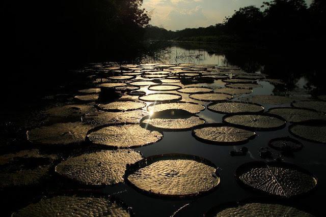 """Thảm thực vật phong phú của Amazon tạo nên 20% oxy trên thế giới. Do đó, khu rừng này còn được mệnh danh là """"lá phổi của hành tinh""""."""