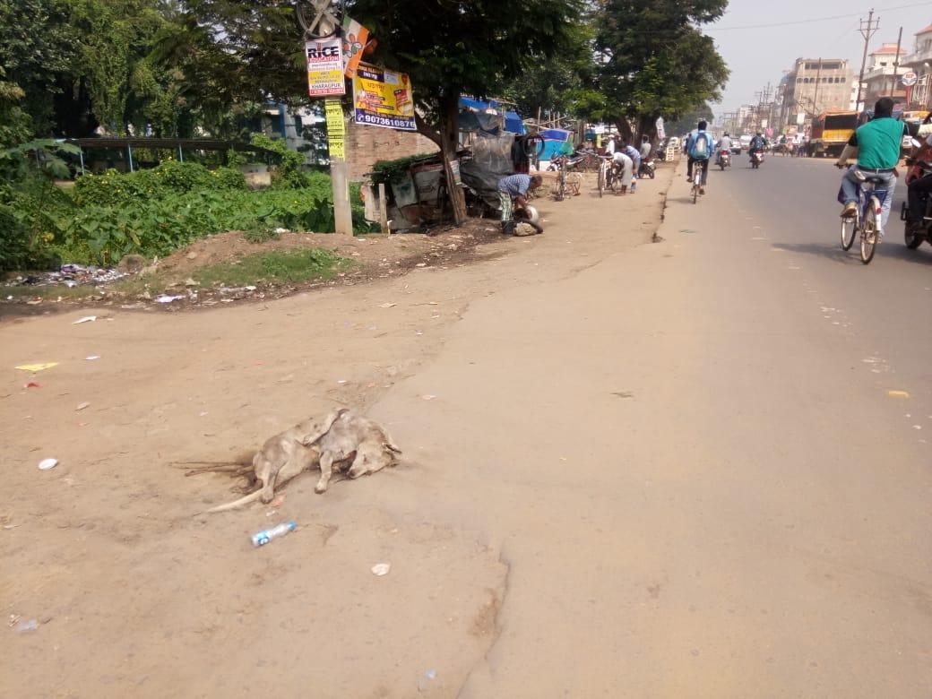 তিনদিন ধরে কলেজের সামনে পড়ে মরা কুকুর, হেলদোল নেই খড়গপুর পৌরসভার 2