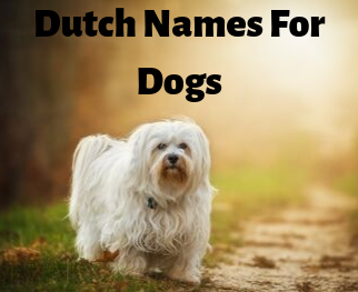 Dutch Names for Dogs