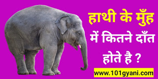 Elephant hathi hathi ke kitne dant hote hai, gk in hindi, latest Articles, today's