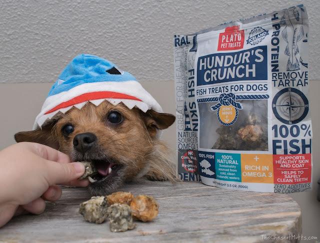 Mini Review: Plato Pet Treats Hundur's Crunch Jerky Minis
