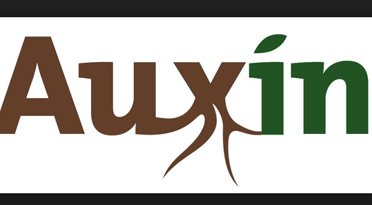 Adalah sebagian hormon tumbuhan untuk proses fisiologi Cara Membuat Auxin Alami (Zat Pengatur Tumbuh) Meggunakan Bawang Merah