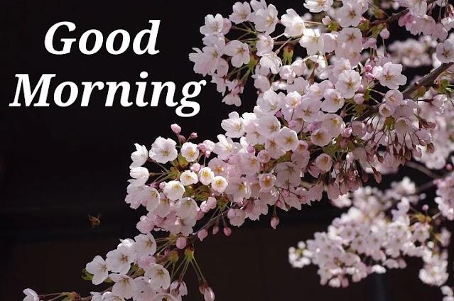 Nice Good Morning.