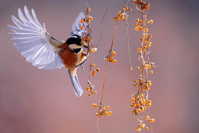 bird wallpaper download