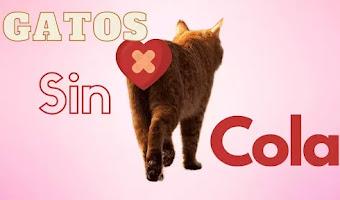 6 Razas de gatos sin cola