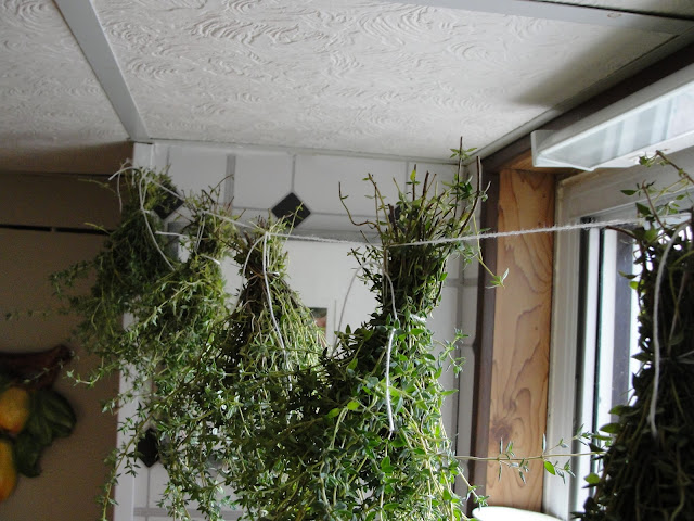 hanging herb bundles