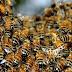 Ataque de abelhas deixa três pessoas feridas e dois cachorros mortos, no Oeste