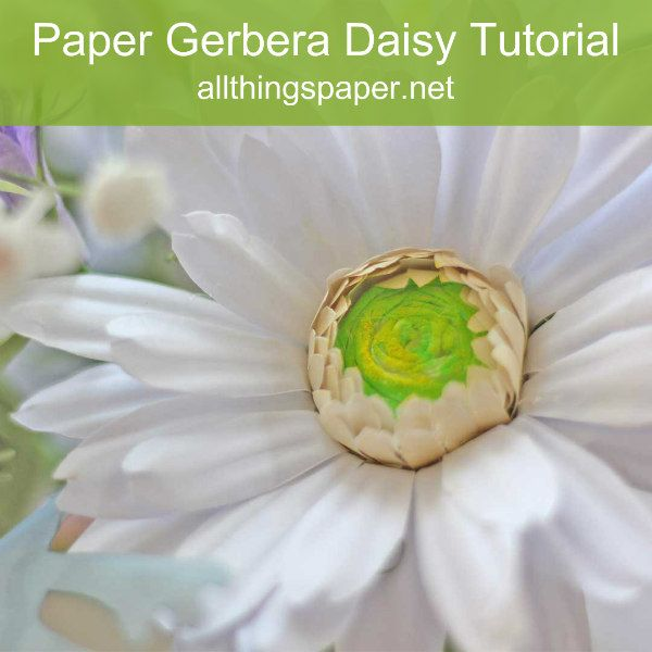 white paper gerbera daisy