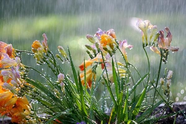 Cara Merawat Tanaman di Musim Hujan