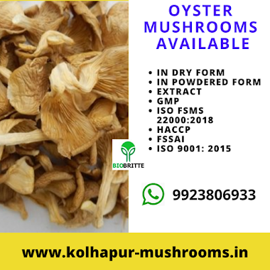 Oyster Mushrooms Available for Sale