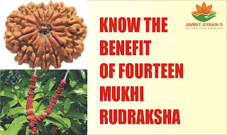KNOW THE BENEFIT OF 14 MUKHI RUDRAKSHA