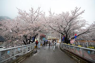 Cheongpunghoban Cherry Blossom Festival