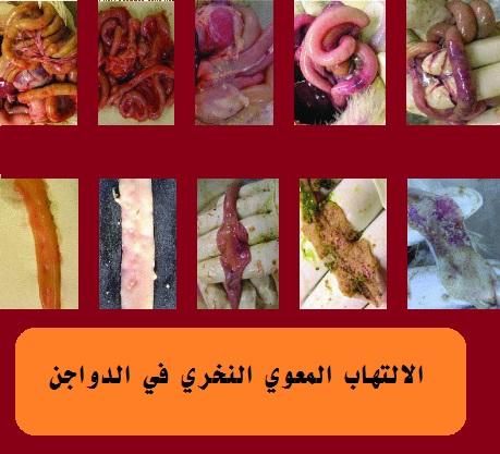 ما هي الامراض البكتيرية, التي تصيب الدواجن ,وطرق العلاج, بالصور ,والتشريح, 1 -التسمم ببكتريا القولون, 2 -كوليرا الدجاج, 3 -السل الكاذب ),عدوى اليارسينا( 4 - ُ التهاب السرة ,أو عدوى كيس المح, 5 -عدوى الميكروبات العنقودية, 6 -الالتهاب المعوي ألنخري, 7 -الالتهاب الجلدي الغرغريني, 8 -مرض الرقبة اللينة أو التسمم المنباري أو البوتيوليزم, 9 -االلتهاب المعوي التقرحي ,)مرض السمان( 10 -الليستريا, 11 -الجمرة, 12 - ُ السل, 13 -عدوى السالمونيال أو الباراتيفويد, 14 -اإلسهال األبيض أو البللورم, 15 -تيفويد الدجاج, 16 -عدوى األريزونا في الرومي, 17 -زكام الطيور )الكوريزا(, 18 -كوريزا الرومي ,أو عدوى البوردتيال, في الرومي, 19 -االلتهاب الكبدي الفيبروني,
