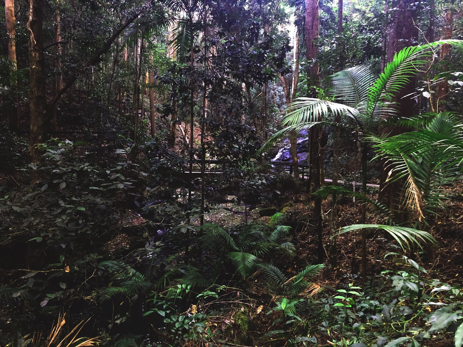 Las w Park Narodowy Kondalilla
