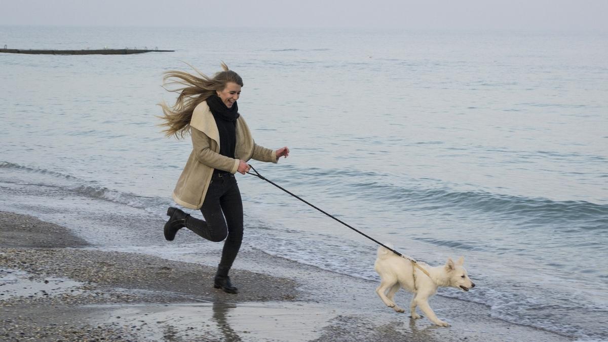 Take your dog on a beach walk