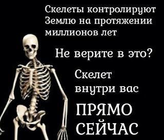 скелет внутри вас