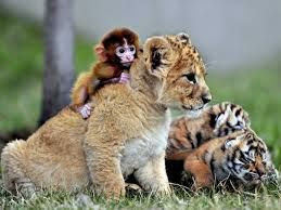 baby animal pics that cheer up your mood
