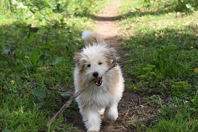 Male dog names starting with v letter