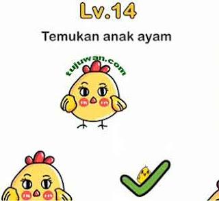 cara temukan ayam anakan brain out dari induknya