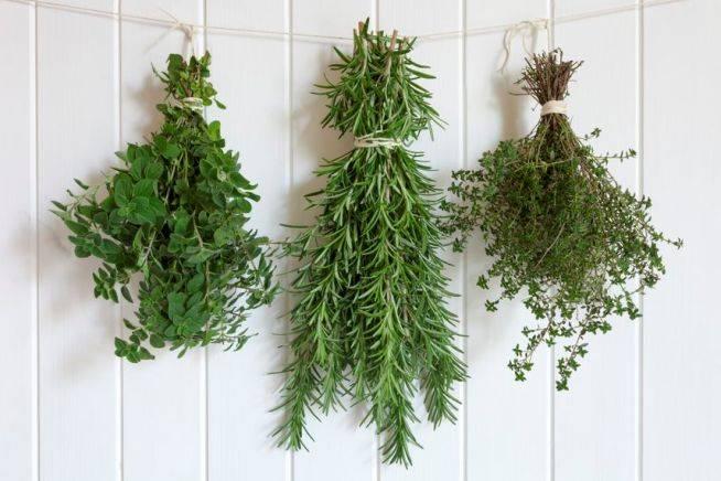 tiga-trik-menjaga-ramuan-herbal-awet-tahan-lama-ber-bulan-bulan