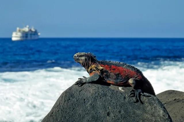 iguana-rosa-galapados