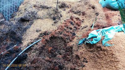 Tro trấu + xơ dừa + vỏ trấu được tôi đổ thành đống, xả nước vài ngày trước khi trồng