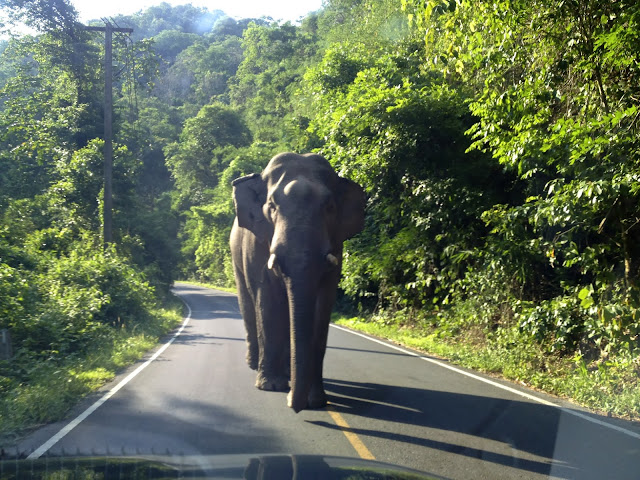 best national parks in thailand wildlife