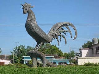 gallo de Morón