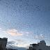 Los pájaros en la simbología zoomórfica