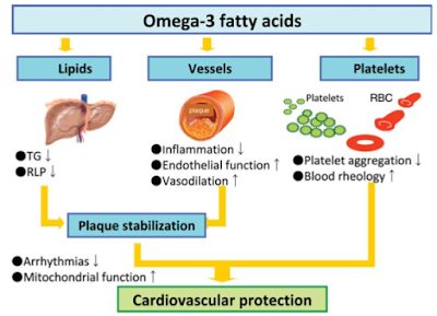 オメガ3脂肪酸と脳卒中