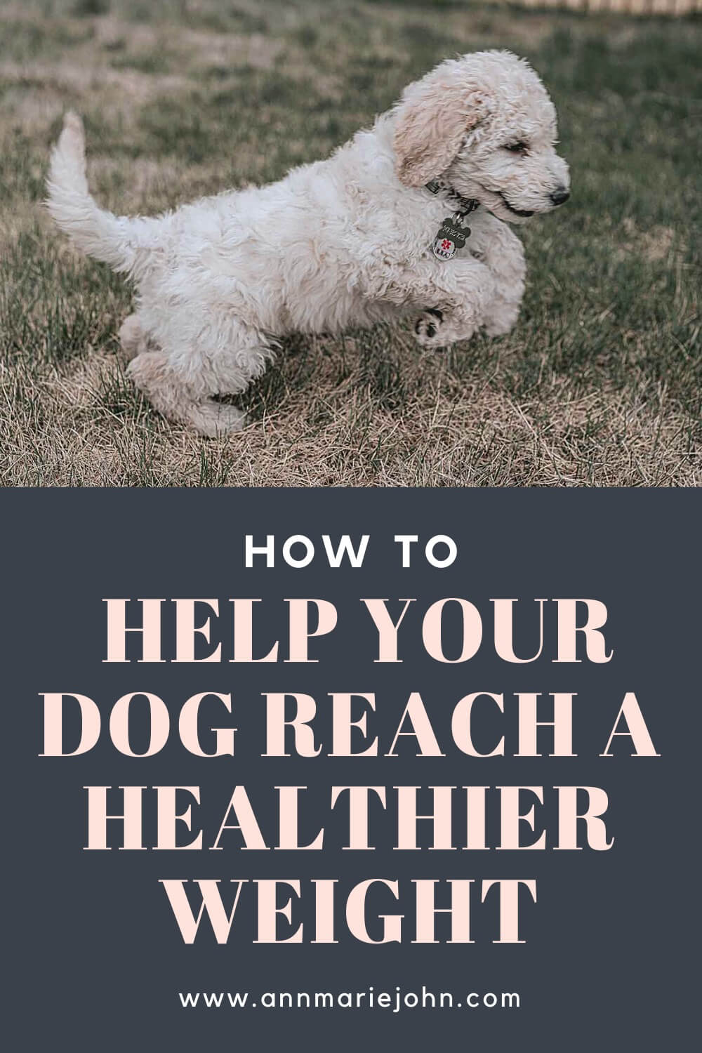 How to Help Your Dog Reach a Healthier Weight